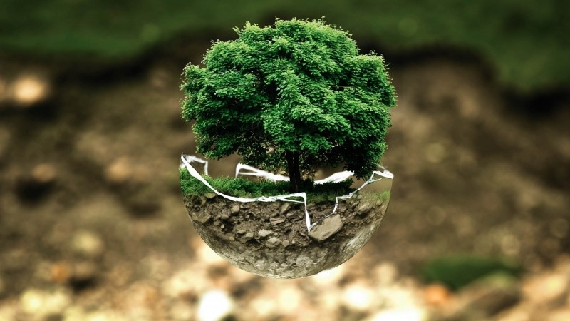 bonsai-tree-in-cracked-soil